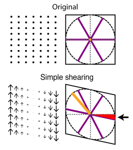 Grids are sheared when mapping onto axes of the environment Shearing reproduces both asymmetry and rotation seen in recorded grid cells. Shearing displaces points on a grid proportionally to the distance from a shear axis (left panels). Shearing a grid pattern comes out as turning it elliptical and introducing a rotation to the previously parallel axis (right panels, red area and arrow).