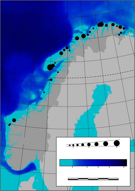 Ninety per cent of nesting seabirds in Norway are found above the Arctic Circle. One reason may be the stable food supply from spawning cod in the Lofoten Islands. Illustration: Nature Communications article