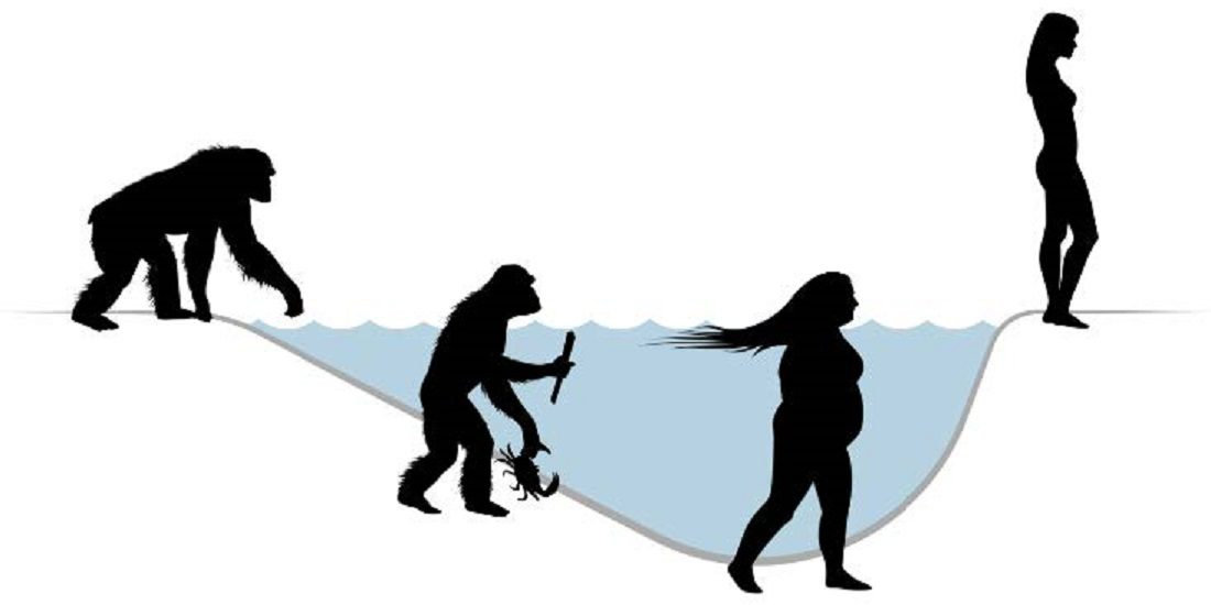 An isolated chimpanzee was the founder in this theory of semiaquatic human speciation. Illustration: Alex Krill