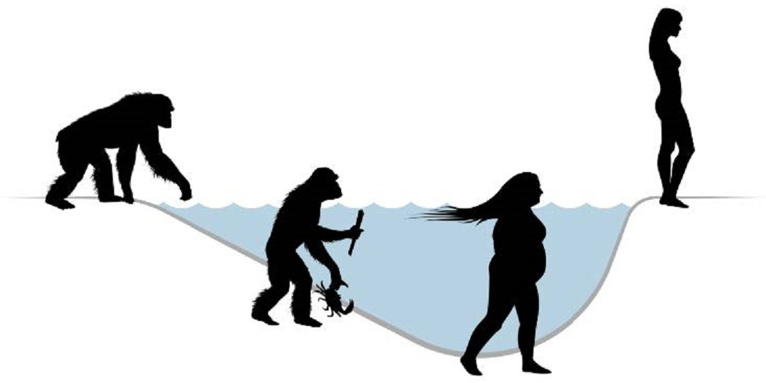 Homeschooling Essay Humans May Have Originated From A Group Of Chimpanzees That Were Isolated  For Up To  Years On The Island Of Bioko Africa Illustration Alex  Krill Justifying An Evaluation Essay also Essay Water Pollution Acclaimed Fossils Might Not Depict Human Evolution Us Essay